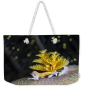 Christmas Tree Worm In Raja Ampat Weekender Tote Bag
