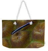 Close-up Of A Goby On Coral, Belize Weekender Tote Bag