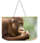 Close-up Of An Orangutan Pongo Pygmaeus Weekender Tote Bag