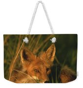 Close View Of A Red Fox At Rest Weekender Tote Bag