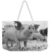 Close View Of A Young Pig In A Snowy Weekender Tote Bag