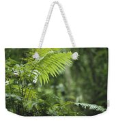 Close View Of Ferns In A Papua New Weekender Tote Bag