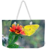 Clouded Sulphur Butterfly Square Weekender Tote Bag