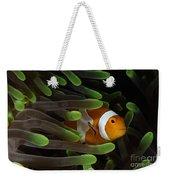 Clownfish In Green Anemone, Indonesia Weekender Tote Bag