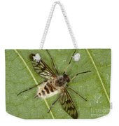 Cluster Fly Killed By Parasitic Fungus Weekender Tote Bag