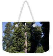 Coast Redwood Weekender Tote Bag