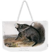 Collared Peccary, 1846 Weekender Tote Bag