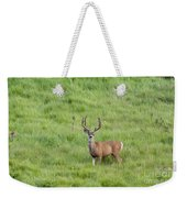 Colorado Deer Weekender Tote Bag