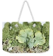 Common Greenshield Lichen Weekender Tote Bag by Ted Kinsman