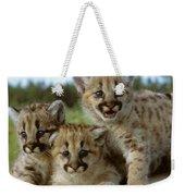 Cougar Cubs On A Rock Weekender Tote Bag
