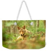 Coyote Caught Napping Weekender Tote Bag