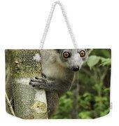 Crowned Lemur Eulemur Coronatus Female Weekender Tote Bag