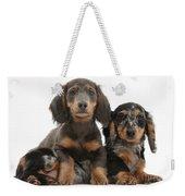 Dachshund And Merle Dachshund Pups Weekender Tote Bag