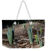 Daffodils Narcissus Weekender Tote Bag