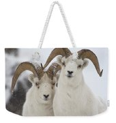 Dall Sheep Ovis Dalli Rams, Yukon Weekender Tote Bag