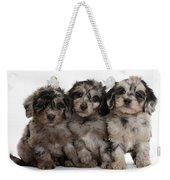 Daxiedoodle Poodle X Dachshund Puppies Weekender Tote Bag