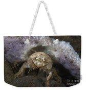Decorator Crab With Mauve Sponge Weekender Tote Bag