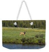 Deer In Tuolumne Meadow Weekender Tote Bag
