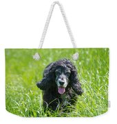 Dog On The Grass Weekender Tote Bag