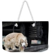 Dog Walking Under A Train Wagon Weekender Tote Bag