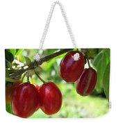 Dogwood Cornus Mas Berries Weekender Tote Bag