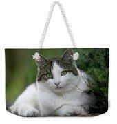Domestic Cat Felis Catus Portrait Weekender Tote Bag