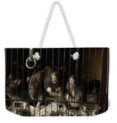 Domestic Rats At The George M. Sutton Weekender Tote Bag
