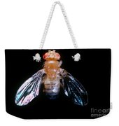 Drosophila With Dichaete Wings Weekender Tote Bag