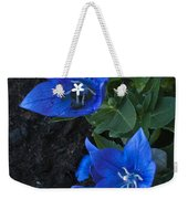 Dwarf Balloon Flower Platycodon Astra Blue  Weekender Tote Bag by Steve Purnell
