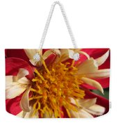Dwarf Dahlia From The Collarette Dandy Mix Weekender Tote Bag