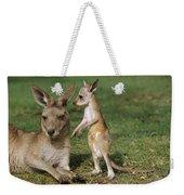 Eastern Grey Kangaroo And Joey Weekender Tote Bag