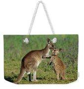 Eastern Grey Kangaroo Macropus Weekender Tote Bag
