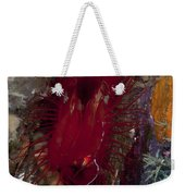 Electric Clam, Lembeh Strait, North Weekender Tote Bag
