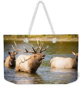 Elk Bugle Estes Lake Colorado Weekender Tote Bag