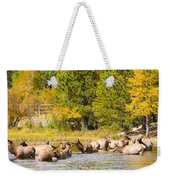Elk Herd With Autumn Colors Weekender Tote Bag