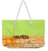 Emerald Ash Borer Parasite Weekender Tote Bag by Science Source