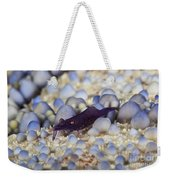 Emporer Shrimp On A Large Pin Cushion Weekender Tote Bag