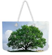 English Oak Quercus Robur In Spring Weekender Tote Bag