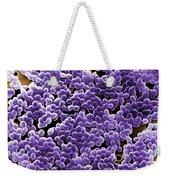 Enterococcus Sp. Bacteria, Sem Weekender Tote Bag