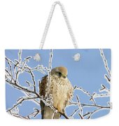 Eurasian Kestrel Falco Tinnunculus Weekender Tote Bag