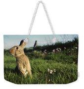 European Rabbit In A Meadow Weekender Tote Bag