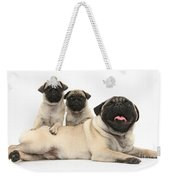 Fawn Pugs, Mother And Pups Weekender Tote Bag