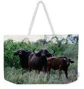 Female Cape Buffalo Syncerus Caffer Weekender Tote Bag