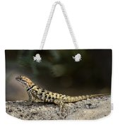 Female Desert Spiny Lizard  Weekender Tote Bag