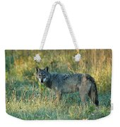 Femle Gray Wolf In The Morning Light Weekender Tote Bag