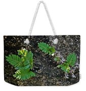 Fern And Coquina Weekender Tote Bag
