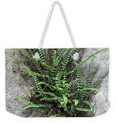 Fern Growing From Crack In Limestone Weekender Tote Bag