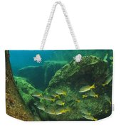Fish And A Sea Lion In The Water At Los Weekender Tote Bag