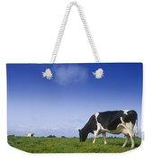 Friesian Cow Grazing In A Field Weekender Tote Bag