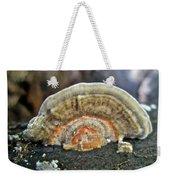 Fuzzy Turkey Tail Shelf Fungus - Trametes Ochracea Weekender Tote Bag